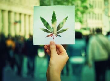 cannabis coltivazione